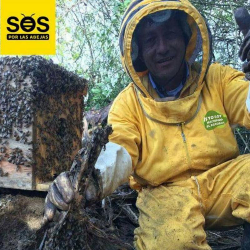 Agricultura amiga de las abejas