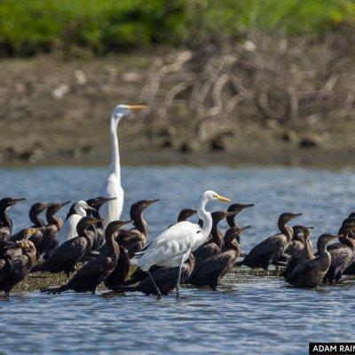 Agricultura protectora de las aves -El Escobal